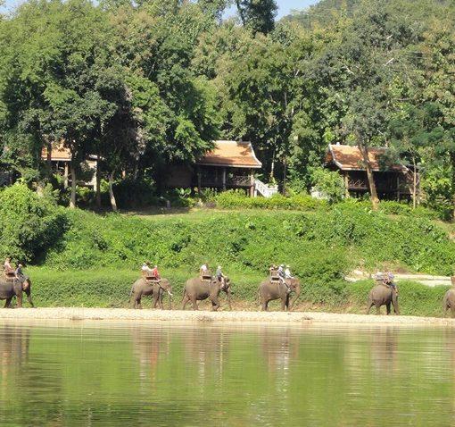 ラオスの大自然の中での象使いになろう! 世界遺産都市古都ルアンパバーンと象使いトレーニング(1泊2日)ー6日間